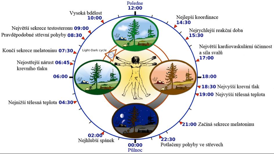 orgánové hodiny – obrázek