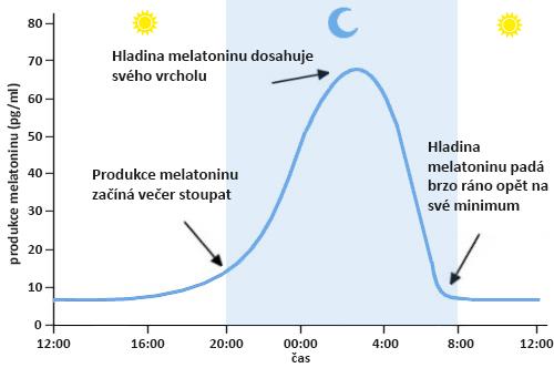 Melatonin – obrázek sekrece během 24 hodin