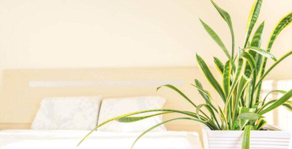 kvetiny-rostliny-do-loznice